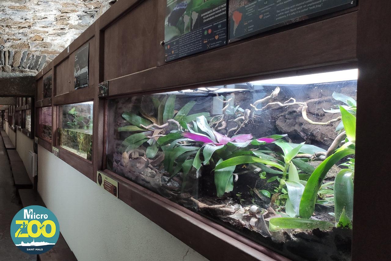 Un terrarium et un aquarium de Micro Zoo Saint-Malo